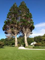 trees and pathway in irish park