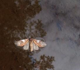 moth floating in river