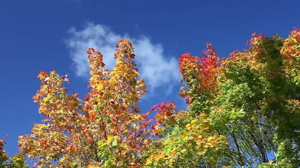 Autumn tree with bright foliage