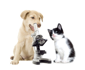 puppy and kitten vets