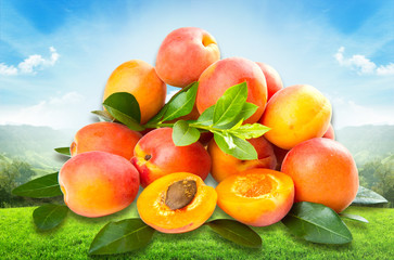 group of fresh apricot