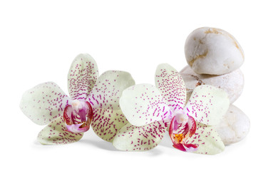 orchid and zen Stones on a white background