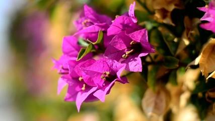 flores movidas por el viento