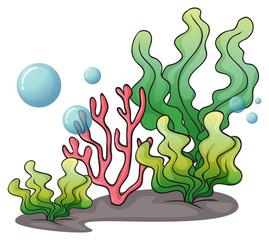 Seaweeds under the sea