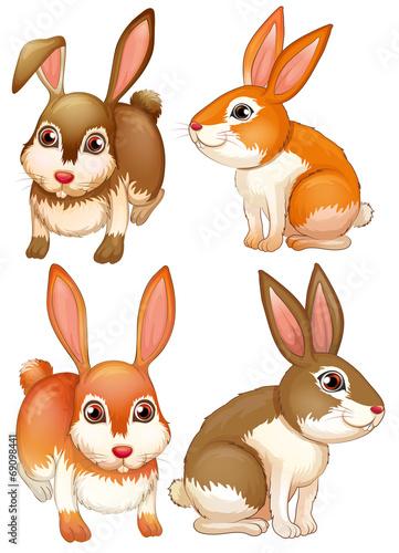 Rabbits - 69098441