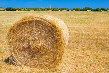 Straw roll bale on the farmland