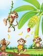 Playful monkeys near the banana plant