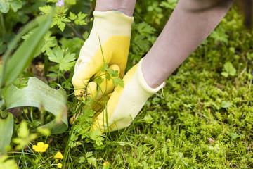 Gartenarbeit, Gardening