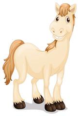 A cute horse