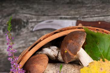 birch boletes on the wooden background