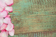Obrazy na płótnie, fototapety, zdjęcia, fotoobrazy drukowane : Rose petal over wooden background