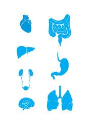 organs vector set