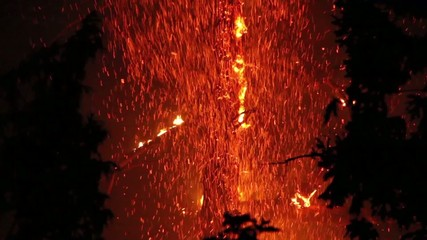 Tree involved in fire at night with flames and sparkles
