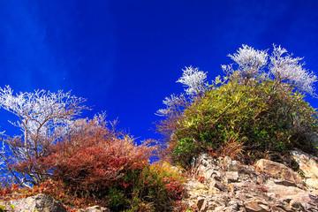 稜線の珊瑚礁
