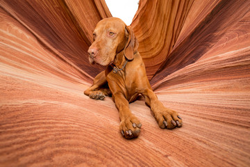 dog laying in the wave