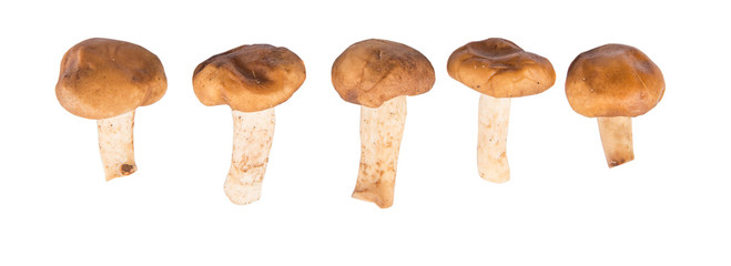 Edible mushroom over white background