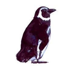 Standing penguin vector illustration. Watercolor painting of