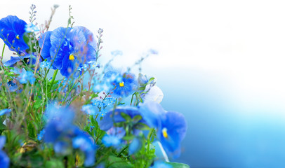 blue summer flowers