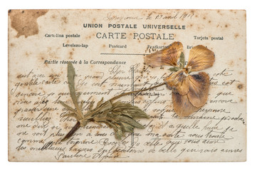 dried pansy flower and old post card isolated on white