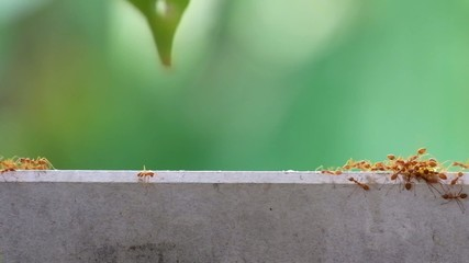 Rea ants walking on the plank