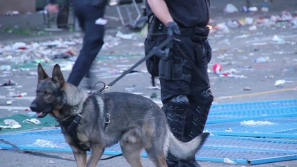 K9 unit dog during riot with trash and fire in the background