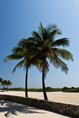 Palm trees along a beach walkway