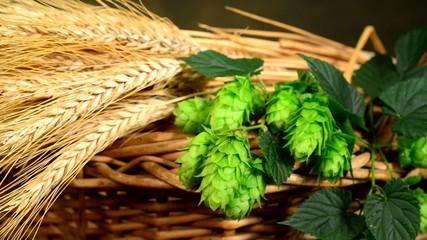 hops and barley malt in the basket,panning