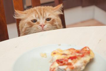 Рыжий кот с опаской выглядывающий из-за стола