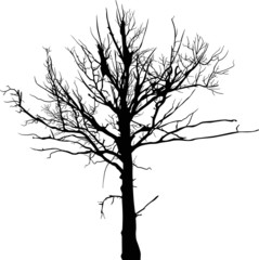 black dry large tree silhouette isolated on white