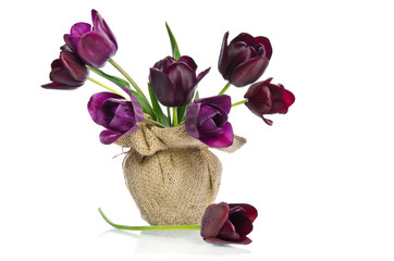 Beautiful purple tulips in a vase decoration in burlap isolated
