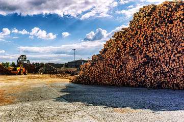Timber stacked at lumber mill
