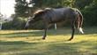 Obrazy na płótnie, fototapety, zdjęcia, fotoobrazy drukowane : Horse Shake
