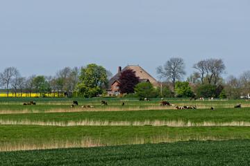 Norddeutsche Landschaft mit einem alten Haubarg