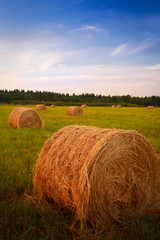 Landscape with hay