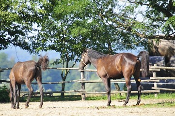 Horses on the horse farm