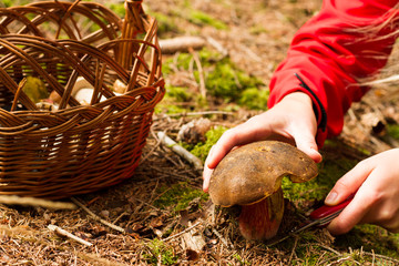 Mushrooming favorite hobby in Czech republic