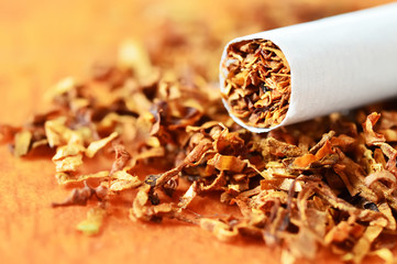 Tobacco in cigarettes with a brown filter close up