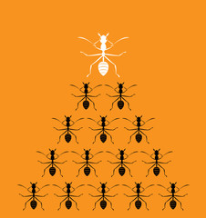 Vector image of an ants on orange background. Leadership concept