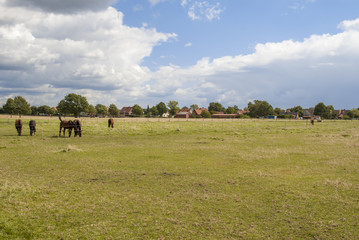 Grassland with horses