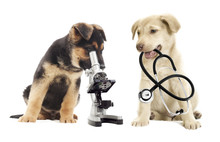 Chiot et microscope