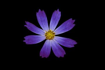 Синий цветок на черном фоне