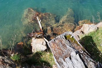 Legno di lago