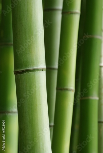 Fotobehang Bamboe 青竹