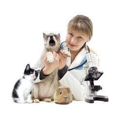 veterinarian and Pets