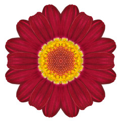 Kaleidoscopic Flower Mandala  Isolated on White