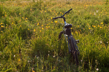 bike in the blossoming field at sunset