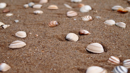 small shells in wet sand