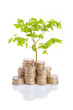 Tree growing from a pile of coins, isolated on white background