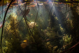 Freshwater Jungle