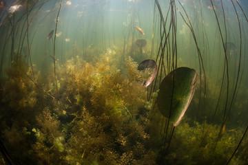 Sunlight and Aquatic Flora